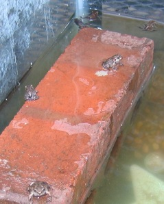 3 Frogs Brick 2 Water