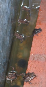 6 Frogs Hanging Around
