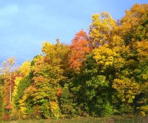 2009 Oct I-40 Leaves 1