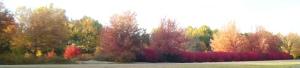 2009 Oct I-40 Leaves 2