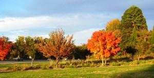 2009 Oct I-40 Leaves 3